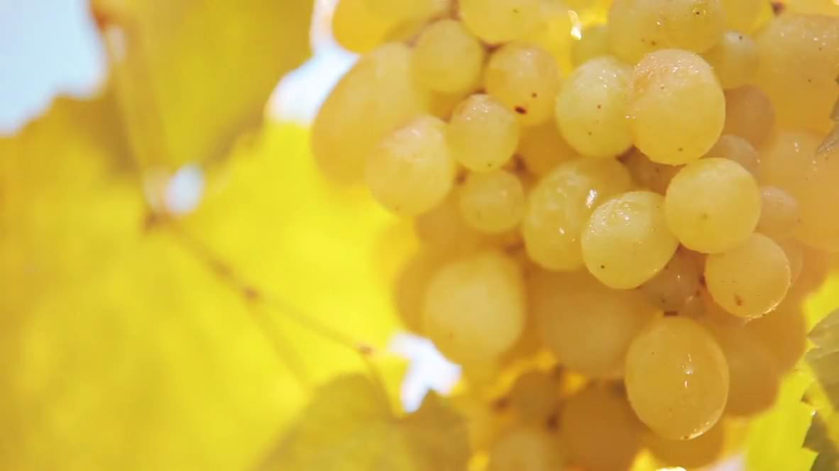 Domaine Glinavos - Greek wines - white grapes
