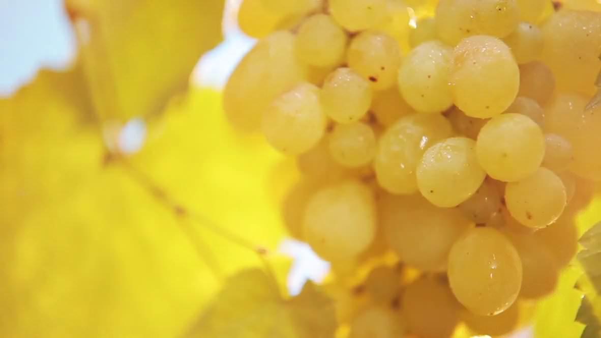 Domaine Glinavos - zitsa - winery